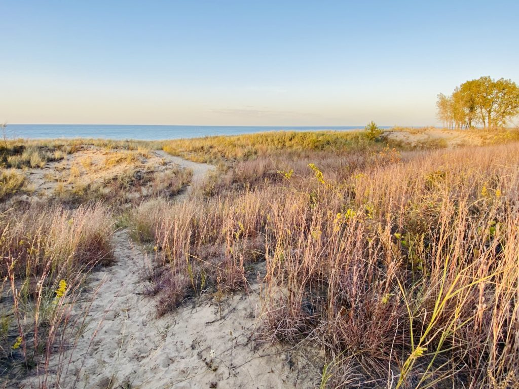 little blue stem lines a beach path to Lake Michigan.